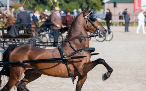 Paardenleed in de aangespannen sport